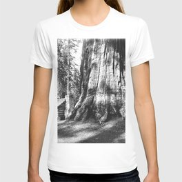 A log cabin dwarfed by a Big Tree in Mariposa Grove in Yosemite National Park, ca.1920 T-shirt