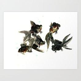 Black Moor, Feng Shui Art, design black fish art, aquarium Art Print