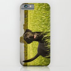 Labrador in the Spring Barley Slim Case iPhone 6s