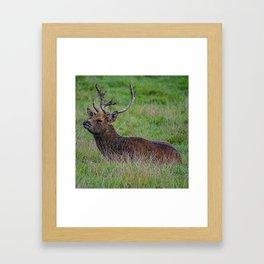 Resting Stag Framed Art Print