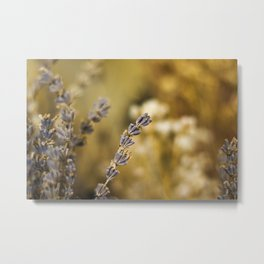 dry flower and plants Metal Print