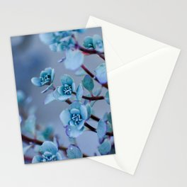Stonecrop Succulent Stationery Cards