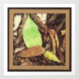 S. Florida Hammock Litter Art Print