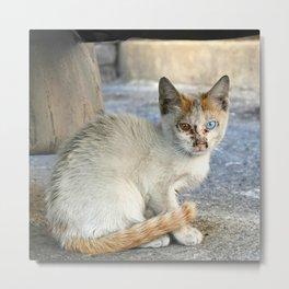 Kitten under a car Metal Print