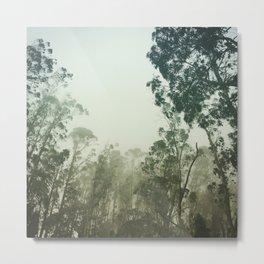 California Forest Metal Print