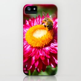 Helichrysum bracteatum with a busy bee iPhone Case