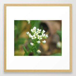 White Spring Flowers Framed Art Print