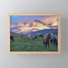 Horses at Sunset - Iceland - Animal Photography - Drawn Voyage Framed Mini Art Print
