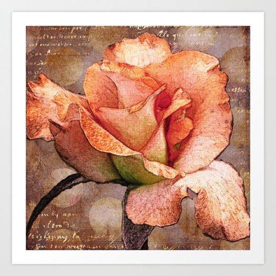 Rose on Grey Art Print
