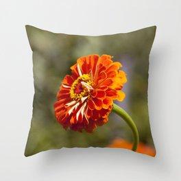 Orange Gerber Throw Pillow