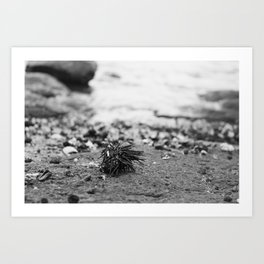 Sea Urchin on an Atlantic Shore Art Print