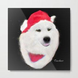 Samoyed Portrait of Tucker Metal Print