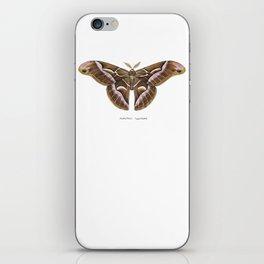 Ailanthus Silkmoth (Samia cynthia) iPhone Skin
