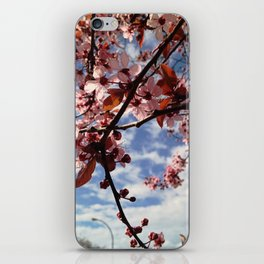 Cherry Blossoms in Spring iPhone Skin