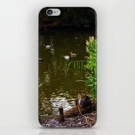 Busted! Cat watches the ducks iPhone Skin