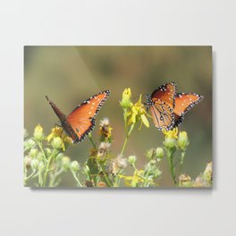 A Pair of Queens on Rubber Rabbitbrush Metal Print