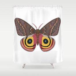 io moth (Automeris io) female specimen 2 Shower Curtain