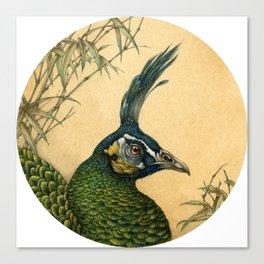 Green Peafowl Head Canvas Print