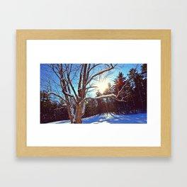 Sunny Winter Tree Framed Art Print