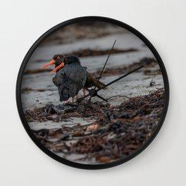 Oyster Catcher Loiter   New Zealand Wildlife Bird Wall Clock