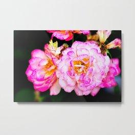 Pink Freckled Rose Flowers Metal Print