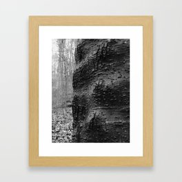 Cracked Bark on a Knobby Tree Framed Art Print