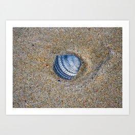 INDIGO COCKLE SHELL ON SAND Art Print