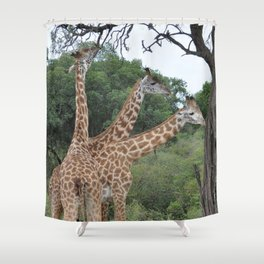 3 giraffes Shower Curtain