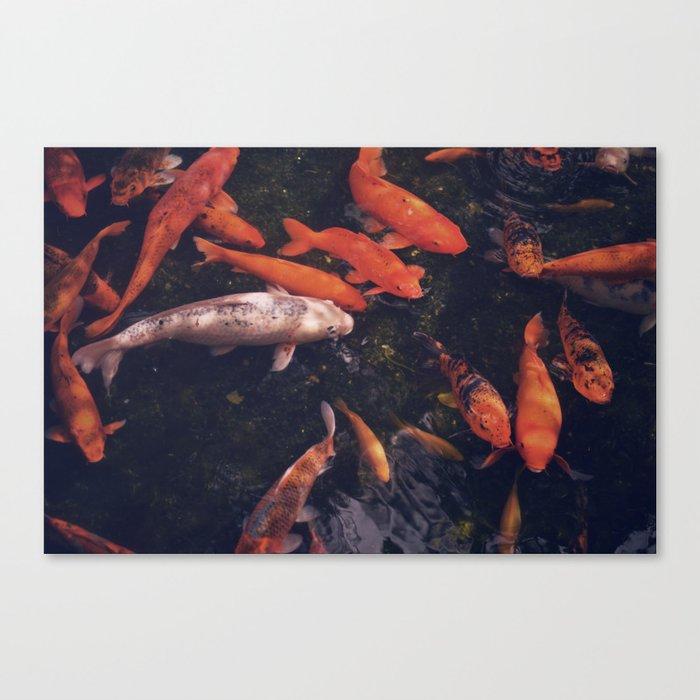 Temple Koi Fish Canvas Print