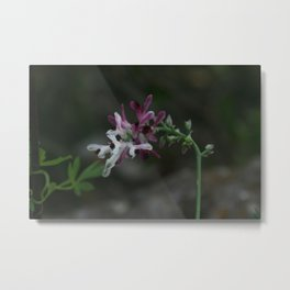 Earth Smoke Flower Metal Print