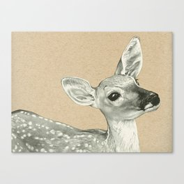 Gentle Fawn Canvas Print