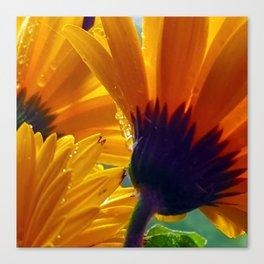 Shasta Sparkle Canvas Print