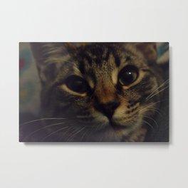 Cat named Zoey Metal Print