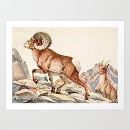 Fuertes, Louis Agassiz (1874-1927) - Burgess Animal Book for Children 1920 (Mountain Sheep) Art Print