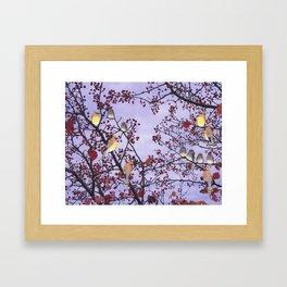 cedar waxwings and berries Framed Art Print