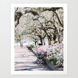 Charleston Battery Park Azaleas Art Print
