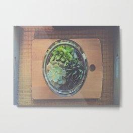 Succulent Bowl Metal Print