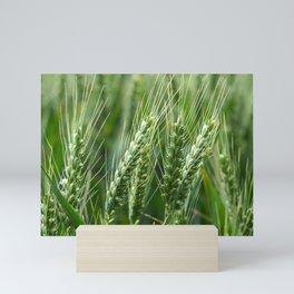 Green Wheat Mini Art Print