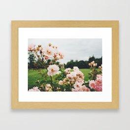 Pink Roses in Marie Antoinette's Garden, Versailles, France Framed Art Print
