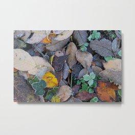 Frosty Forest Floor Metal Print