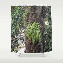 Epiphyte growth on tree in rainforest Shower Curtain