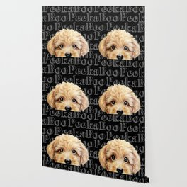 Peek A Boo-Toy poodle-Beige yellow tone Wallpaper