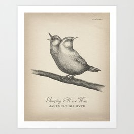 Gossiping House Wren - Black and White Art Print