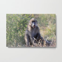 """Hey, whassup,"" said the Baboon Metal Print"