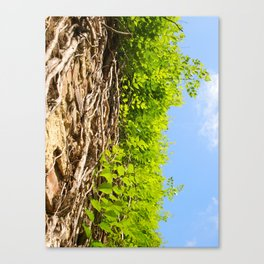 Vines in Mobile, AL Canvas Print