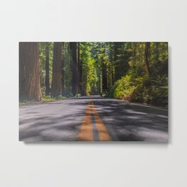 Avenue of The Giants Metal Print