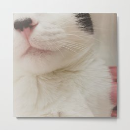Black Nose Kitten Metal Print