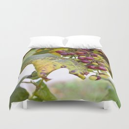 Green and purple grapes on the vine Duvet Cover