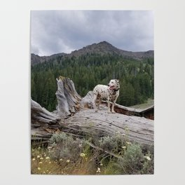Charlotte in Muldoon Canyon Poster