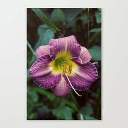 Summer Florals Canvas Print
